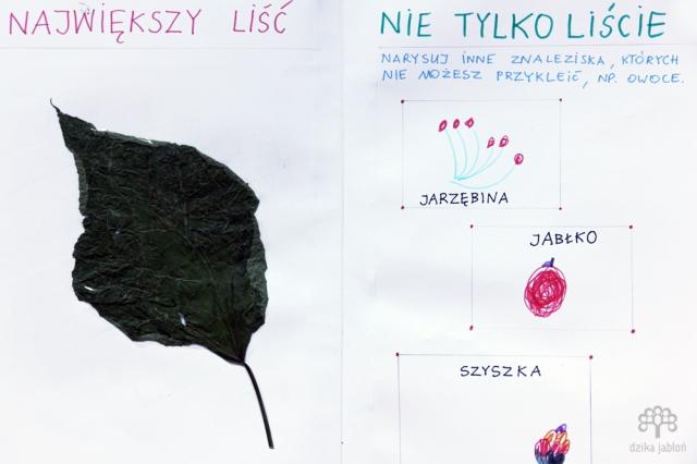 dzika-jablon716b